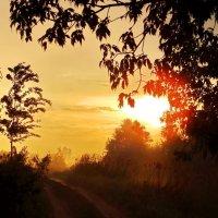 В лучах заката... :: Татьяна Шестакович