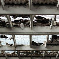 Крыша :: Дмитрий Арсеньев