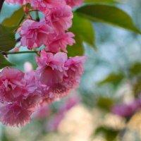 Весна :: Мария Баран