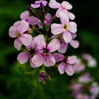 Цветок :: Сергей Крестапович