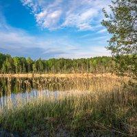 Озеро :: Борис Устюжанин
