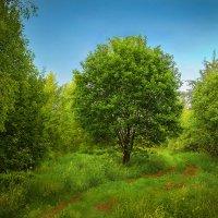 Забытая дорожка :: Андрей Агапов