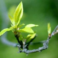 Первые весточки весны :: Татьяна Куртукова