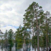 северная речка :: Олег Петрушов