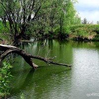 На  малых  речках... :: Игорь Пляскин