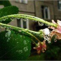 Опять дождь... :: kudrni Кудрявцева