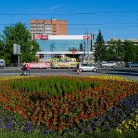 Цветочная поляна :: Сергей Черепанов