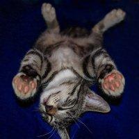 Спят усталые котята. :: Анатолий Клепешнёв