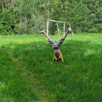 Ура, лето!!! :: Ольга Маркова