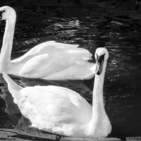 Верная пара... :: Любовь Назарова