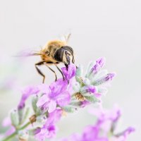 Bee - 2 :: Виталий Доарме