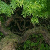 Необычное дерево :: Оксана Ветрова