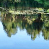 Река Кема :: Валерий Талашов