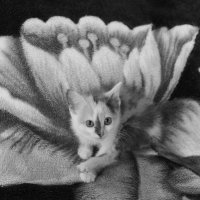 "Фотосессия ""Найди кота"") :: Айнагуль Бекебаева"