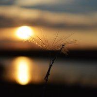 малыш семечко задержался полюбоваться уходящим солнцем :: Алена Рыжова