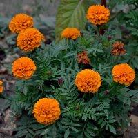 Цветы :: Виталий Павлов