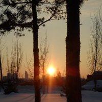 Зимний закат :: Диана Одинцова