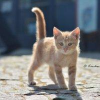 Милаха :: Kirchos Foto