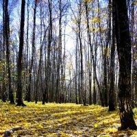 Осень в Битцевском парке :: Александр Одношевный