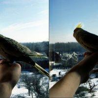 Лети в небеса :: Маша Тарасенко