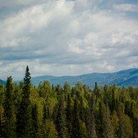 Шерегеш...Гора Зеленая... :: Екатерина Цурикова