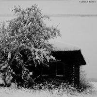 заброшенная деревня :: Юрий Злобин