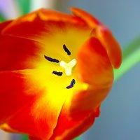 Оранжевое солнышко :: Вера Лазарева