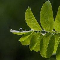 raindrops :: Dmitry Ozersky