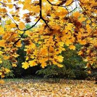 Осень в Полтаве :: Yulia Sh