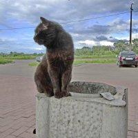 Сторожевой кот. :: Sergey Serebrykov
