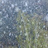 И падал снег в середине апреля :: Людмила Селегенева