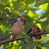 Что это за фрукт? :: Svetlana Plasentsiia