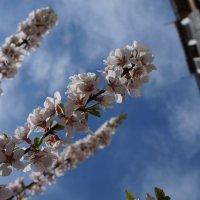 Весна! :: Алексей А