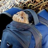 кот в рюкзаке :: Вячеслав Завражнов