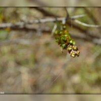 Весна :: Ириска Жукова