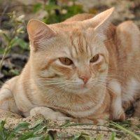 мой любимы кот :: Татьяна Литовчик