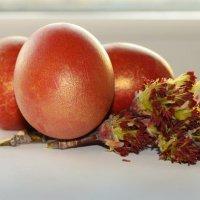 Крашенные яйца :: Caba Nova