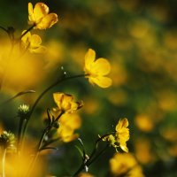 Цветочки :: Mayya Zorina