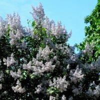 Весна в парках Питера!!! :: Александр Кокоулин