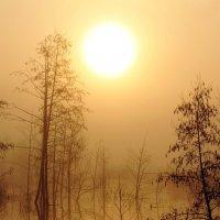 Туман на болоте :: Сергей Михайлович