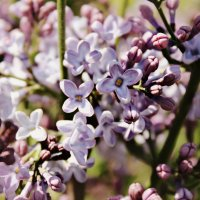 весна :: Юлия Грей