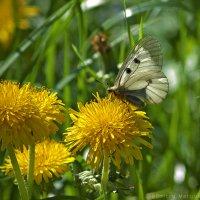 Бабочка :: D. Matyushin.