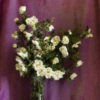 Как хороши, как свежи были розы :: Ольга Семенова