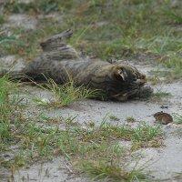 Кошка и мышка. :: Эдуард Закружный