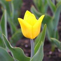 Flower :: Александра К