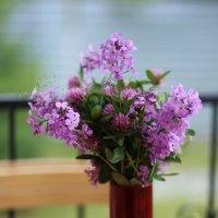 Полевые цветы :: Наталья Гусева