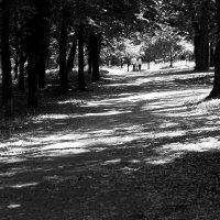 Пара в парке :: Иван Лазаренко
