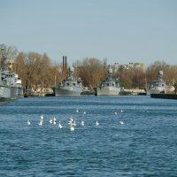 Лебеди Балтийского залива :: Ирина Шарапова