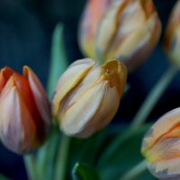 Flowers :: Анастасия Томилова