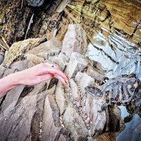 ох эти ногти, так и манят.... :: Юлия Коноваленко (Останина)